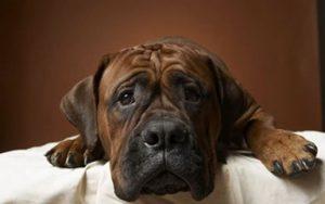 Ветеринарная клиника «Доктор Котов»
