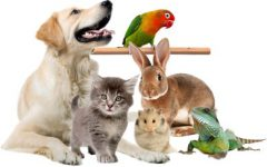 Клиника «Ветеринар»