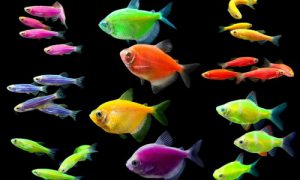 Салон аквариумистики «Подводная сказка»